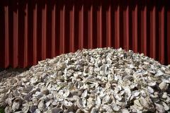 Hamneskär, ostronskal